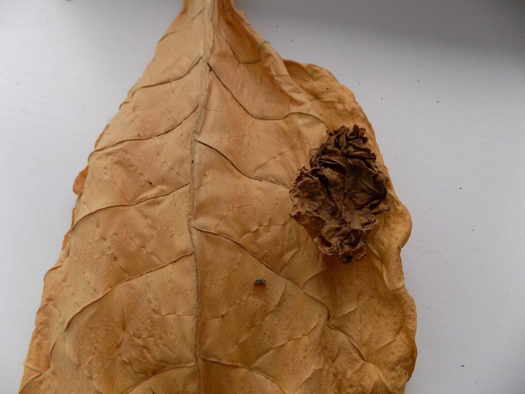 Фекрментация табака в домашних условиях