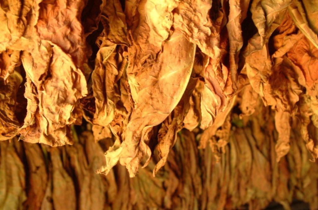 Хранение неферментированного табака после сушки