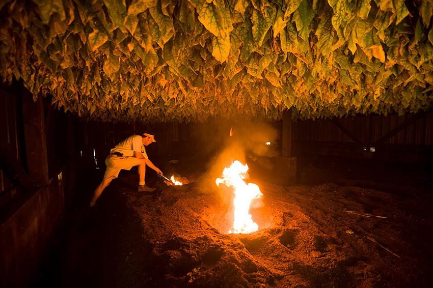 Огневая сушка табака